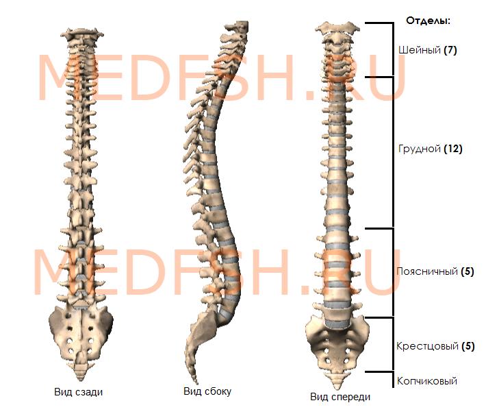 Нижняя кость позвоночника 6 букв thumbnail