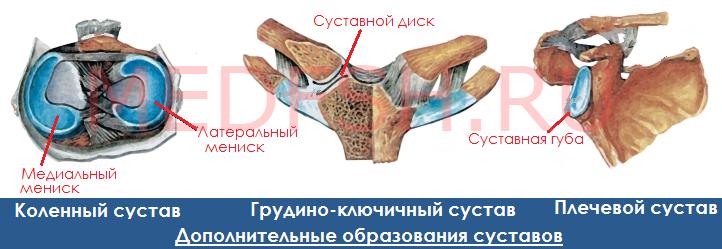 Дополнительные образования суставов