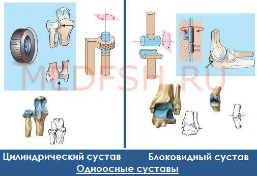 Классификация суставов: одноосные суставы