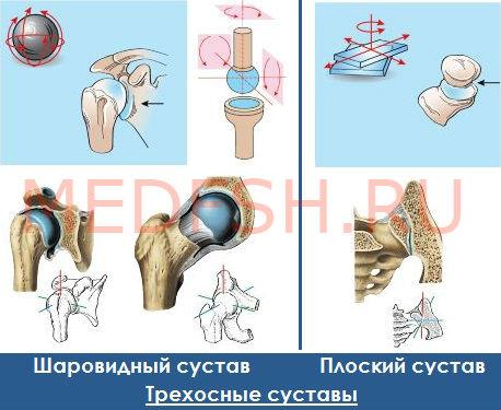 Классификация суставов: трехосные суставы