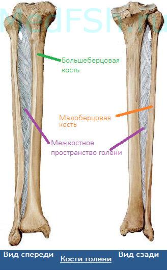 Перелом дистального конца плечевой кости