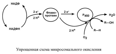 Упрощенна схема микросомального окисления