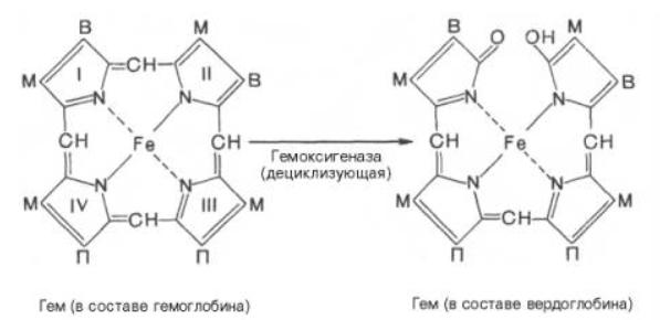 Гемоглобин и вердоглобин