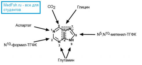 Происхождение атомов пуринового кольца