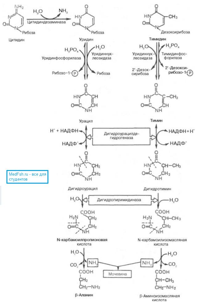 Распад пиримидиновых нуклеотидов