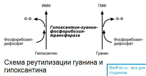 Схема реутилизации гуанина и гипоксантина