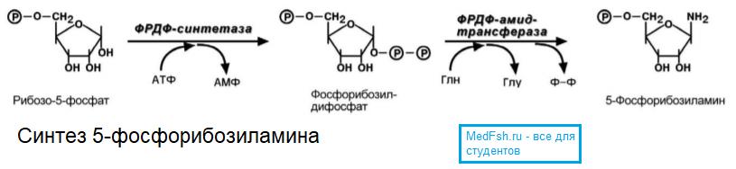 Синтез 5 фосфорибозиламина