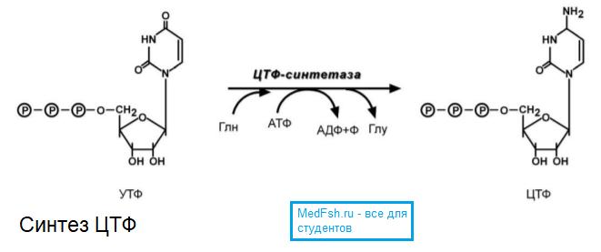 Синтез ЦТФ