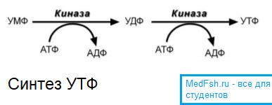 Синтез УТФ