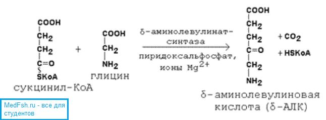 Синтез аминолевулиновой кислоты