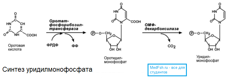 Синтез уридилмонофосфата